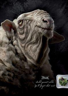 Carne Ovelha