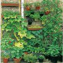 Acercando la horticultura ecológica a la ciudad ecoagricultor.com