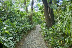 tanzania coffee plantation