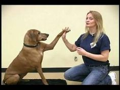 Teach your dog new tricks, like how to high five with its paw. Learn how with expert tips on dog tricks in this free pet care and obedience video. Dog Training Near Me, Training Your Puppy, Dog Training Tips, Leash Training, Training Schedule, Mites On Dogs, Hypoallergenic Dog Food, Dog Boarding Near Me, Stop Dog Barking