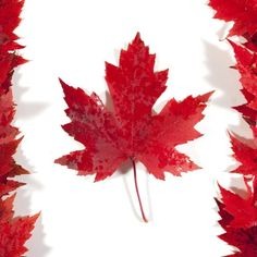 Happy Canada Day. #Padgram
