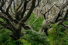 Tea tree forest | Flickr - Photo Sharing!
