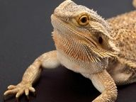 Caring for Reptiles