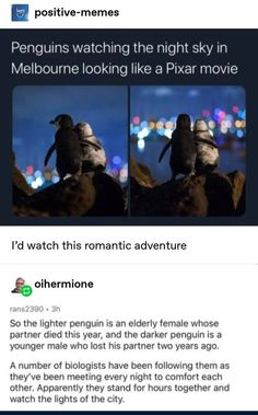 Funny Memes For Your Containment Entertainment Pics) - Funny Gallery Cute Funny Animals, Funny Cute, Tumblr Posts, Positive Memes, Pixar Movies, Faith In Humanity Restored, Wholesome Memes, Animal Memes, Funny Animal Humor