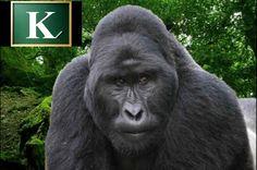 Naučite abecedu sa gorilom - animacija