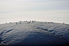 A herd on top of a mountain in winter.,BoredPanda