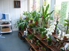 orchid room envy