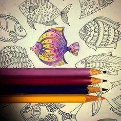 Color combination...