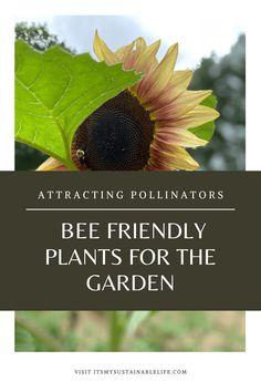 Planting bee friendly herbs and plants in your garden area is a win for both nature's pollinators and your culinary ventures alike. Attracting pollinators is easy to accomplish when you focus on planting these herbs that provide a nectar and pollen source throughout the season.