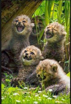 über was die wohl so lachen?