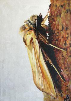 Nicola Andalis - Noctuidae
