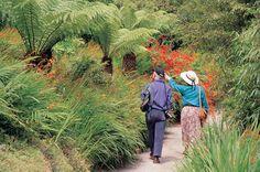 Beach Path in Summer, Trebah Garden, Cornwall Amazing Gardens, Beautiful Gardens, Cornwall, Garden Plants, Paths, To Go, Beach, Summer, Image