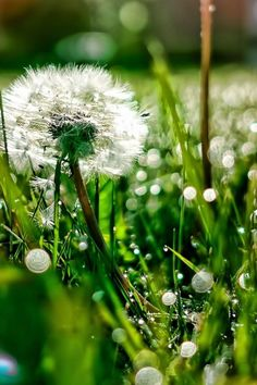 640-Meadow-l