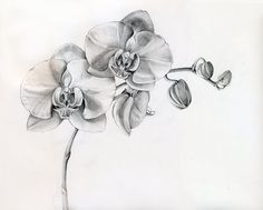I want this in blue and purple, like my wedding flowers.. Body Mods.  | tattoos picture orchid tattoo