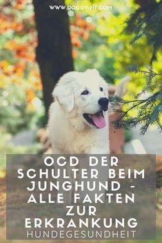 Wenn ein Welpe oder Junghund einzieht, geht man eigentlich davon aus, dass er gesund ist und sich Gelenkprobleme erst im Verlauf des Alterungsprozesses einstellen. Mit der OCD der Schulter haben wir allerdings eine Gelenkerkrankung, die bereits in den ersten Lebensmonaten des jungen Hundes auftritt. Was sie bedeutet und wie sie sich zeigt, erfährst du im Artikel. Gelenkerkrankungen | junger Hund | Junghund | OCD |  OCD Schulter | Schmerzen | Welpe | Hundegesundheit | Hundewissen