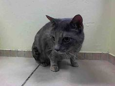 TO BE DESTROYED 5/9/14Brooklyn CenterMy name is GIGI. My Animal ID # is A0998594. UPDATE: ***SAFE*** Pulled by Feline Rescue of SI- Donation website: http://felinerescueofstatenisland.webs.com/