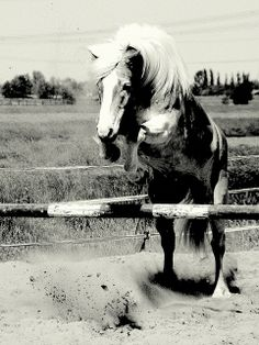 """Some say - """"Jumping is just dressage with speed bumps!""""   http://horsejumps.net/"""