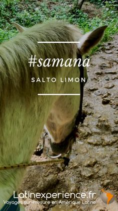 Samana, Destinations, Les Cascades, Movies, Movie Posters, Dominican Republic, Latin Dance, Horse, Travel