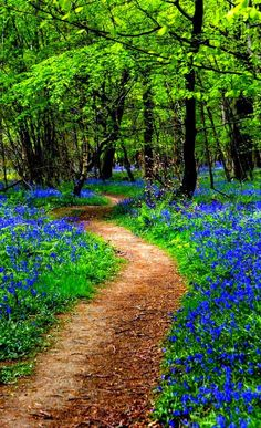 through the bluebell woods Kings Wood Kent UKPath through the bluebell woods Kings Wood Kent UK Beautiful World, Beautiful Places, Beautiful Pictures, Magic Places, Nature Landscape, Forest Path, Walk In The Woods, Nature Pictures, Pathways