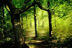 The Magical Forest Calls Me