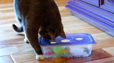 Pourquoi se ruiner en jouets ultra-sophistiqués quand un vulgaire bout de ficelle suffit à amuser un chat pendant des heures ? Distraire et stimuler son compagnon à 4 pattes, ça n'est pas si compliqué. Quelques objets de récupération et le ...