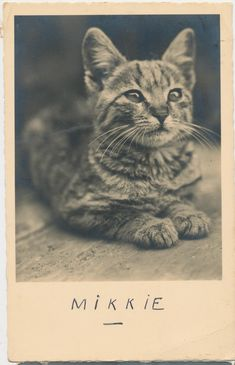 Mikkie, 1931 | 30 Delightful Cat Photos From The '30s