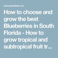 How to choose and grow the best Blueberries in South Florida - How to grow tropical and subtropical fruit trees.