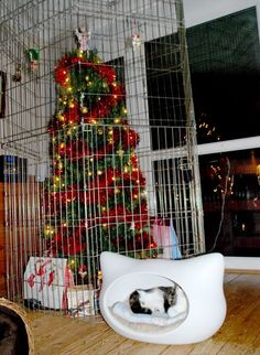 cat proofing the Christmas tree...haha! Love that the cat is straight chillin in his bed right beside the tree in a cage