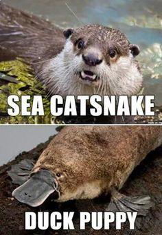 Alternative names for animals.