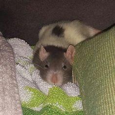 What a cute sleepy head!!