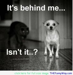 .... scaredy cats :) awesome great dog quotes - Google Search