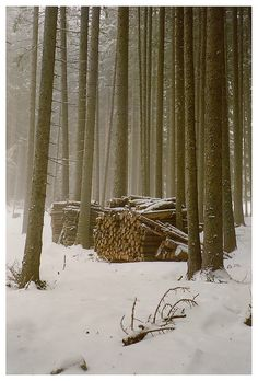A snowy winter in the Adirondack Mts. Get that wood pile ready to go.