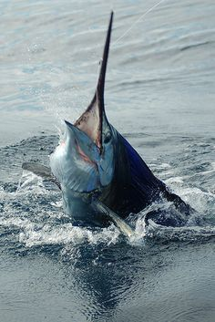 Swordfish  Personas pueden pescar en sus tiempo libre porque es divertido.