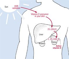 How the body makes vitamin D- Vitamin D, Ebola and Infectious Disease Processes