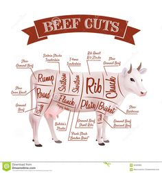 Beef Cuts Illustration Stock Vector - Image: 60383983
