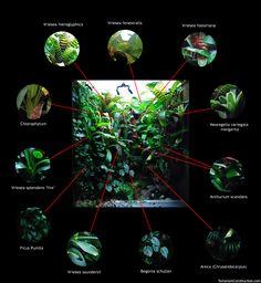 My terrarium plants
