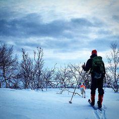 Fint på fjellet i dag #villmarksliv #friluftsliv #utno #jakt #grouse #trening #engelsksetter #tarstand #jaktogfiske #jaktjenter #mittnorge #finnmarksvidda #liveterbestute #winterwonderland #norsknatur #norrøna by turmamma