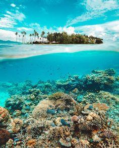 Let's just dive in - Apo Island never disappoints! Beach Fun, Beach Trip, Wanderlust Hotel, Beach Please, Dive Resort, Beach Vibes, Destinations, Ocean Scenes, Beautiful Ocean