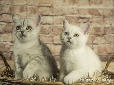 11 Wochen ... heute ist internationaler Weltkatzentag! | kh photo & design Claudia Kellermann