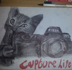 biro pen kitten x capture all those memories that are important to you