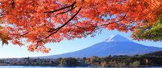 """""""Kōyō"""" (Autumn Foliage)"""
