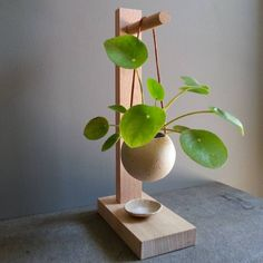Die neue Trendpflanze: Pilea peperomioides, Here are a few Indoor gardening tips for the beginner who wants to grow a home vegetable garden. Learn how to choose plants, containers and the best location for a vegetable garden. Hanging Plants, Potted Plants, Indoor Plants, Indoor Gardening, Foliage Plants, Indoor Plant Stands, Organic Gardening, Greenhouse Gardening, Tomato Plants