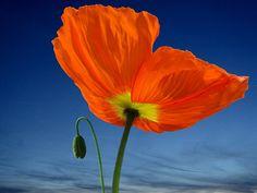 Las mas bellas flores del mundo. (Fotos)
