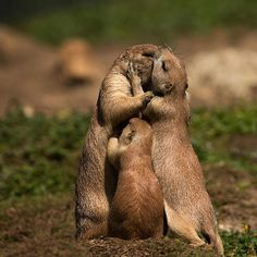 """Adorable Moments in Animal Parenting:  """"Group Hug! We are a Family!"""""""