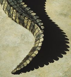 cocodrile