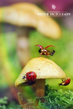 Enchanted Forest: Ladybugs