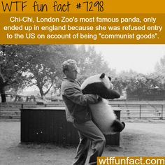 WTF Facts : funny, interesting & weird facts — Chi-Chi the panda - WTF fun fact