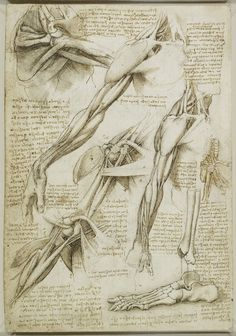 Da Vinci's Limbs - anatomy drawings, c1510.