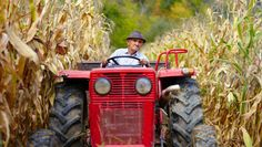 U.N. warns us to eat less meat and lay off biofuels, or we're in for it (less grain-fed meat)