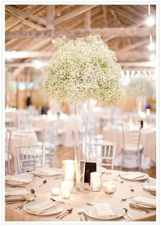 Floral: Baby's Breath Baby's breath centerpieces - tall enough to add height, but not block people's faces!Baby's breath centerpieces - tall enough to add height, but not block people's faces! Winter Wedding Decorations, Wedding Table Centerpieces, Flower Centerpieces, Tall Vase Centerpieces, Wedding Tables, Centerpiece Ideas, Wedding Reception, Reception Decorations, Flowers Vase